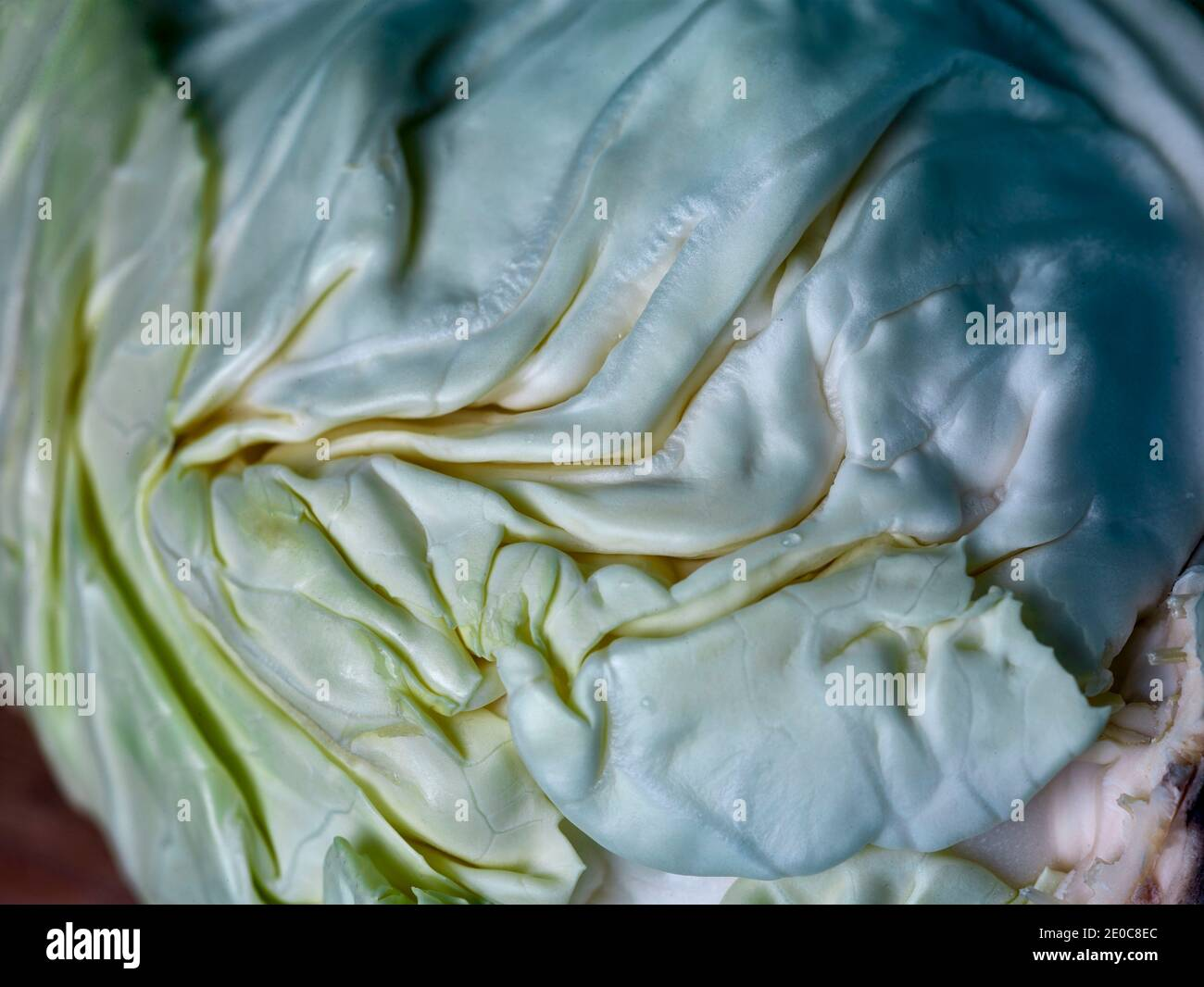 Close up of green pointed cabbage, food ingredient portrait Stock Photo