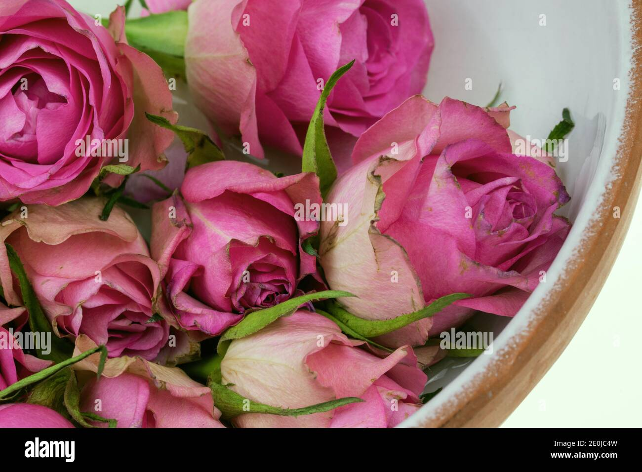 Roses a present for Valentine's Day and also for a birthday. Stock Photo