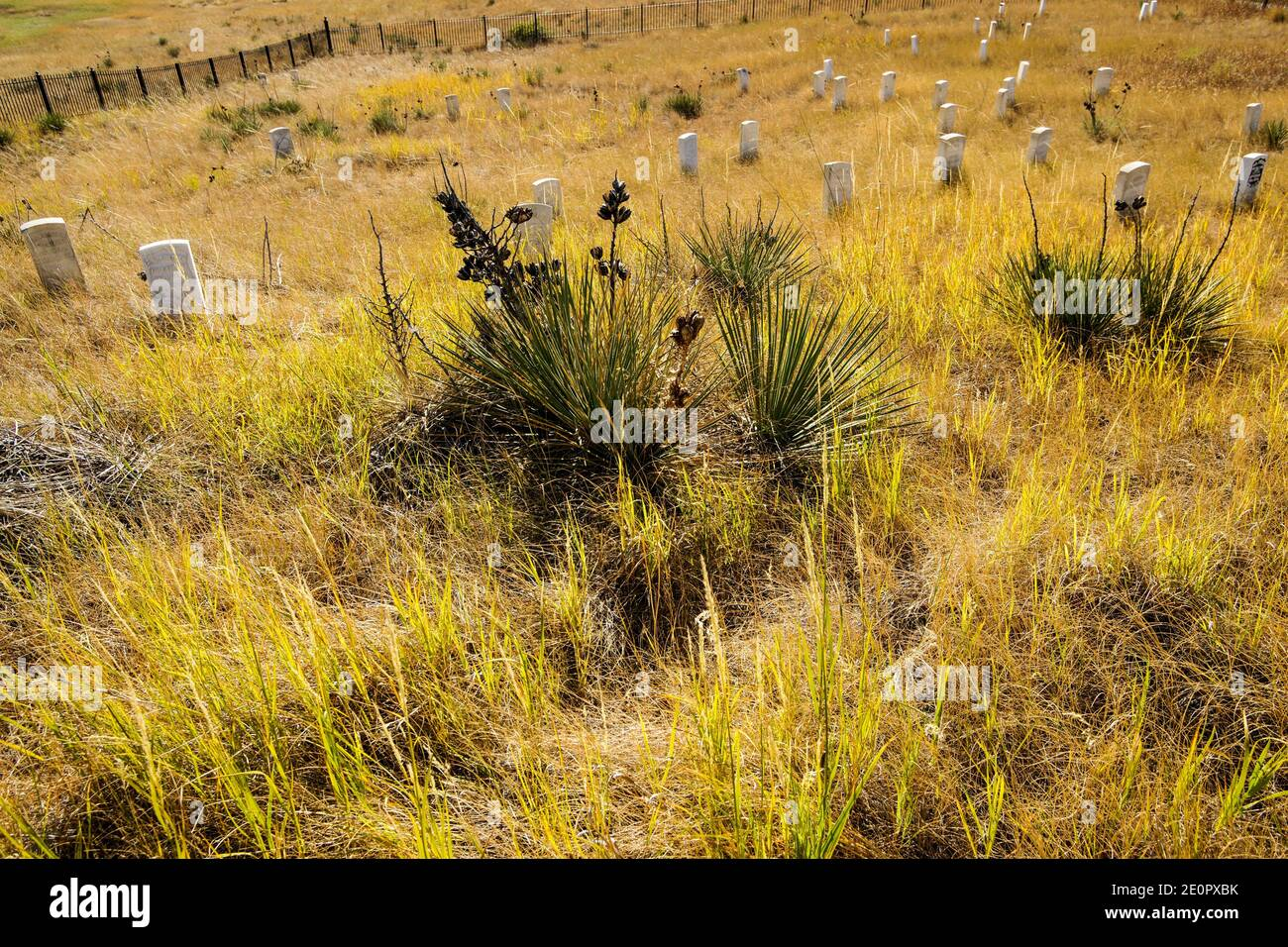 Headstones, Last Stand Hill. Little Bighorn Battlefield National Monument. Crow Agency, Montana, U. S. A. , North America. Stock Photo