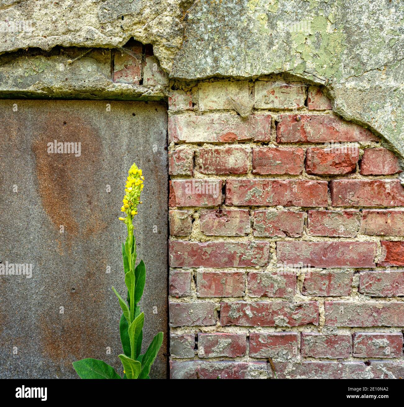 Plant In Front Of A Stone Wall Stock Photo