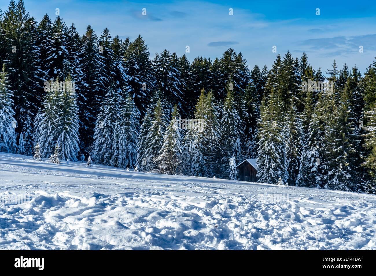 Frisch verschneite Landschaft mit Haus am Waldrand. snowy landscape with a holiday home at the edge of forest, a sunny day. winter wonderland Austria Stock Photo