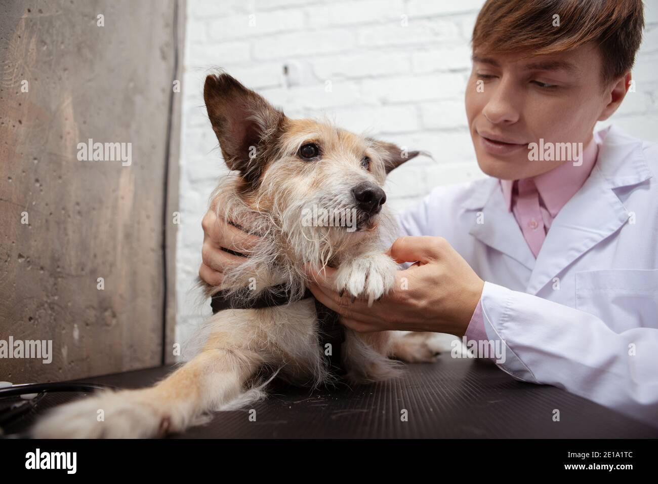 Adorable fluffy mixed breed shelter dog having his paws examined by professional veterinarian Stock Photo