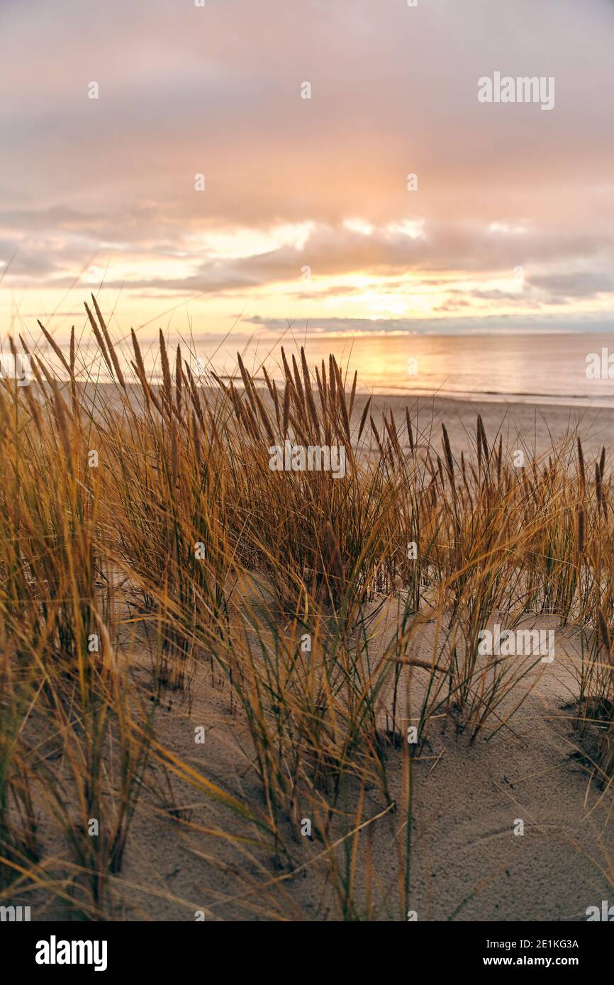 Tall dunes with dune grass and a wide beach below Stock Photo