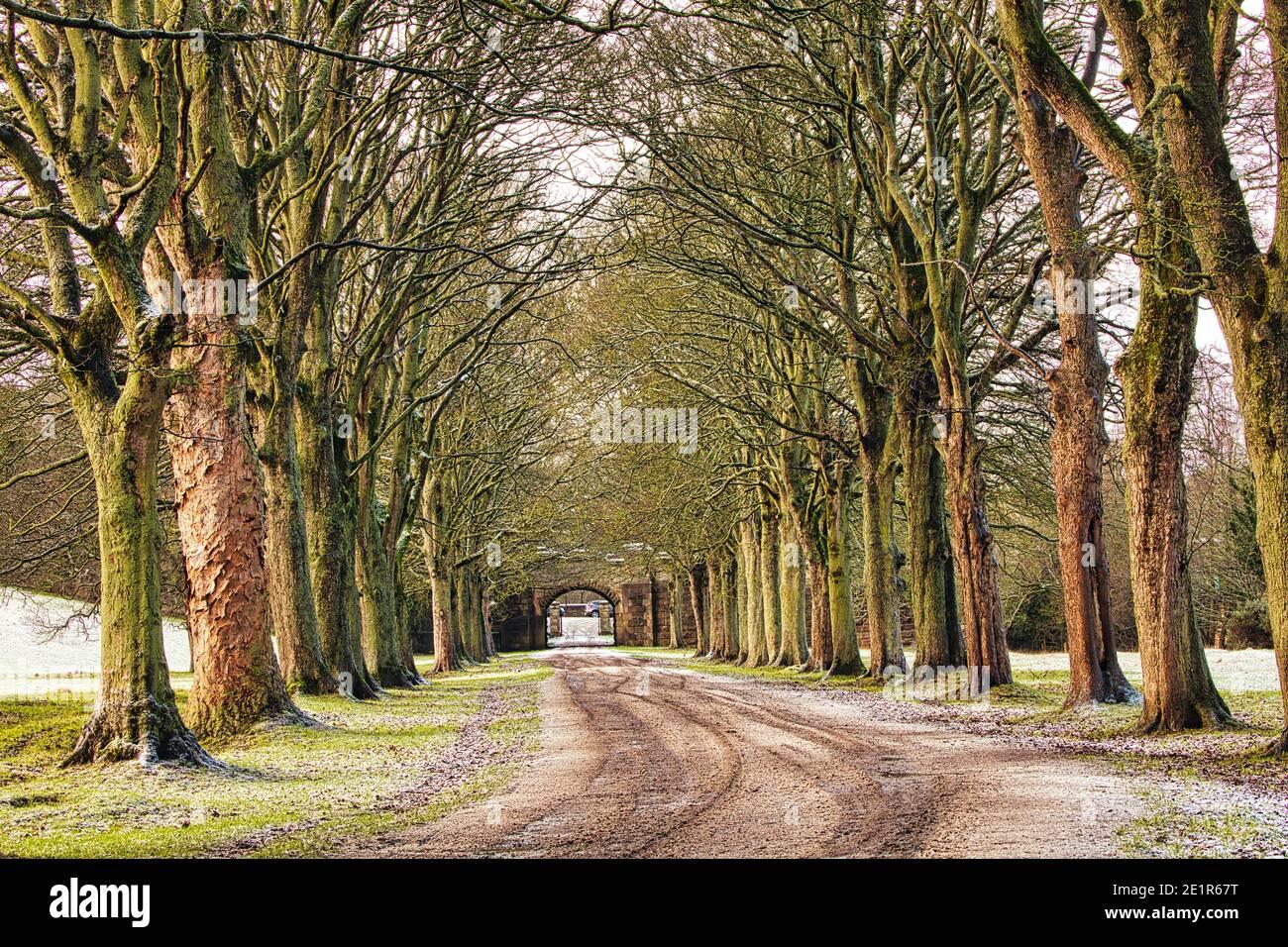 Avenue of Trees at Winter near Durham, County Durham, England, UK. Stock Photo