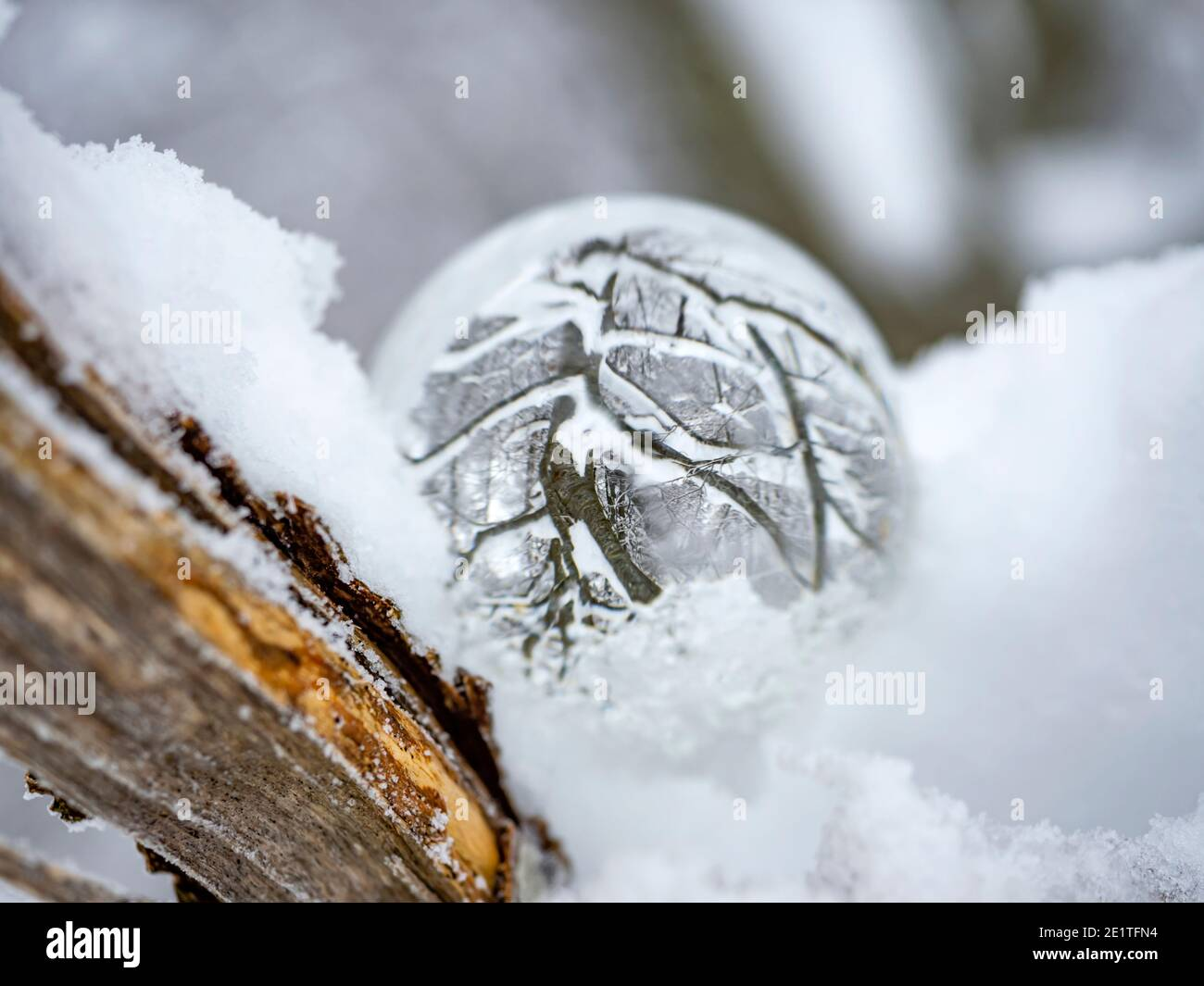 Ice glass ball on tree branch Stock Photo