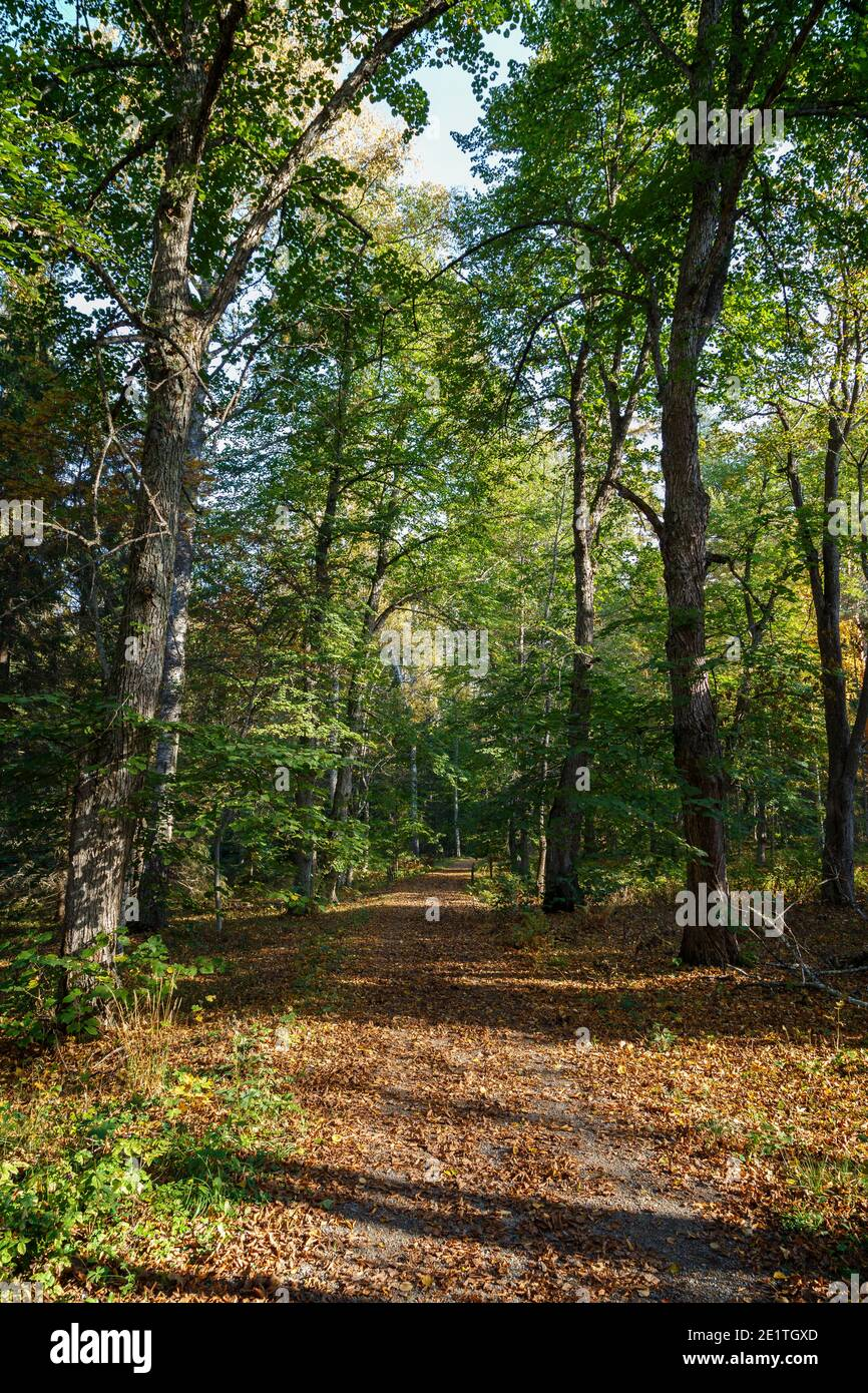Trees and fallen leaves on a footpath in the forest at the Aulanko nature reserve in Hämeenlinna, Finland, on a sunny day at autumn. Stock Photo