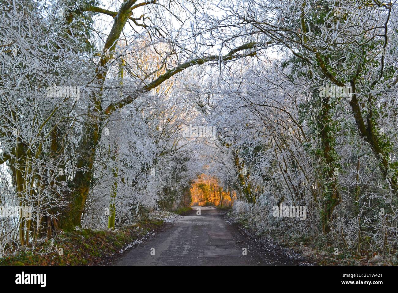 Fackenden Down, in Kent, near Sevenoaks, in snow and frost in January 2021 in late afternoon. Iced up trees, misty vistas, frosted branches, icy road Stock Photo