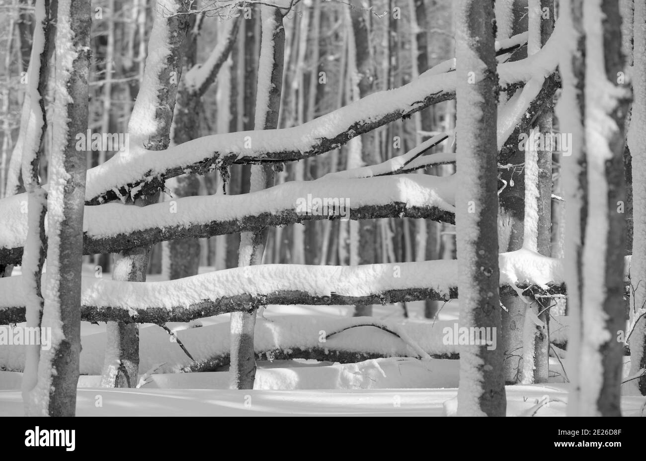 Winter at Mount Lusen in National Park Bavarian Forest (Bayerischer Wald), Europe, Central Europe, Germany, Bavaria Stock Photo