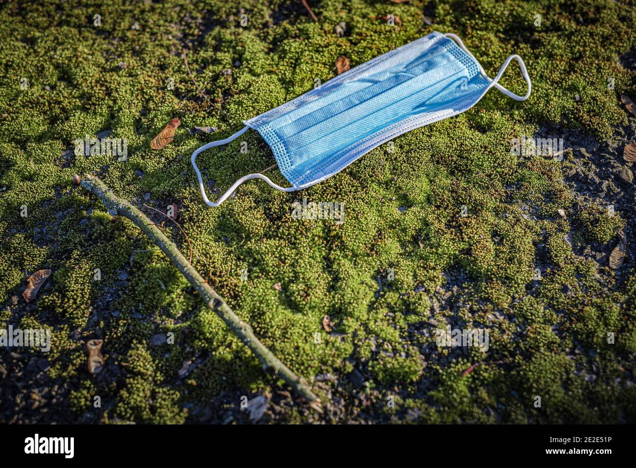 Blue corona mask in moss Stock Photo