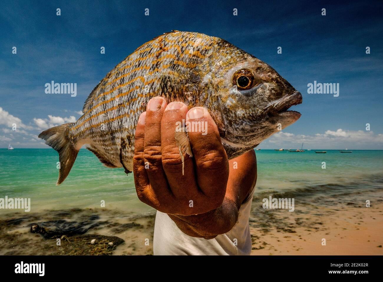 Fisherman holding a fish flat on a beach in Maceió, Brazil Stock Photo