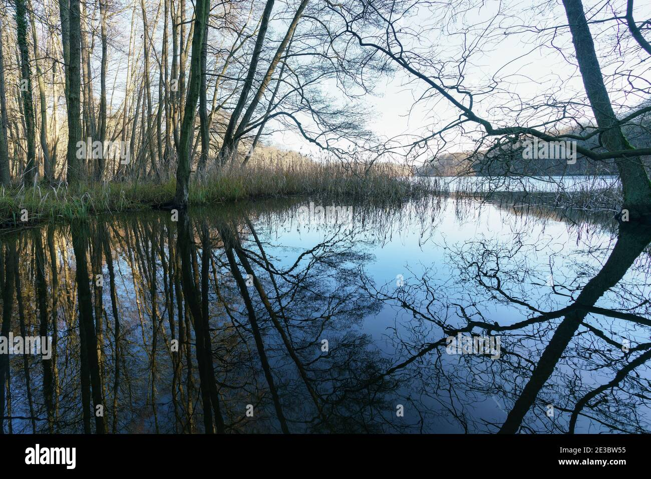Reflections of trees on the water surface of Huwenowsee, Meseberg, Germany Stock Photo