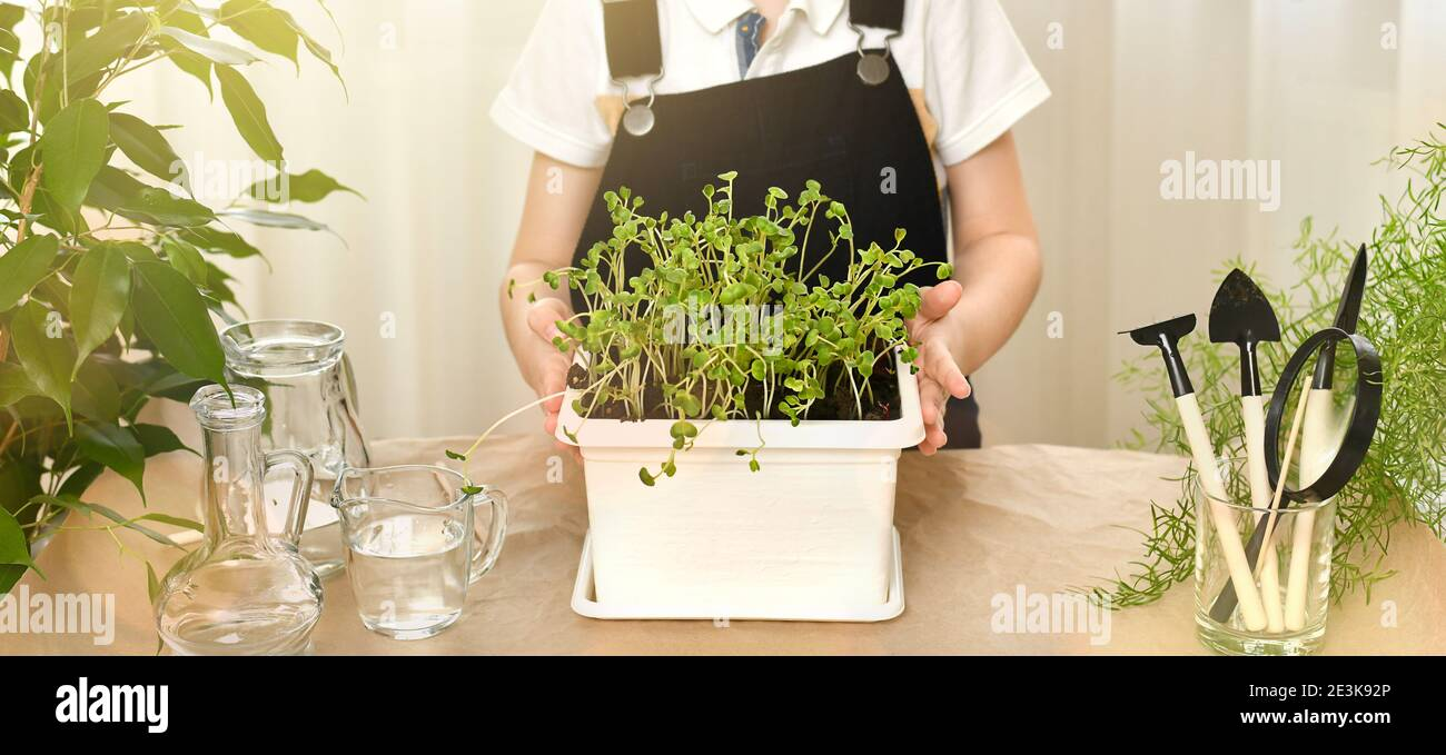 The child hands show off a pot of pot with sprouted green seed sprouts. Gardening, caring and growing plants. Nearby are shovels, rakes and water in t Stock Photo