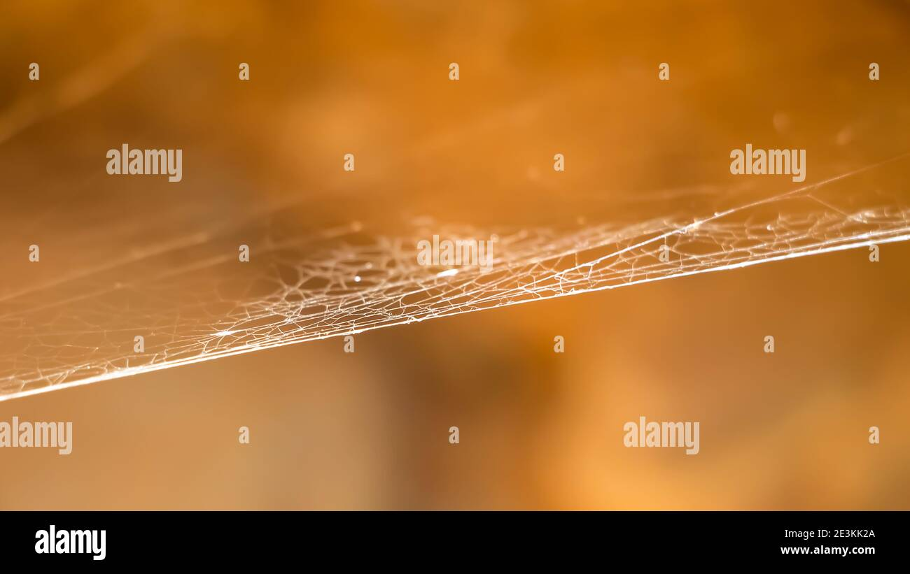 Natural web spider Stock Photo