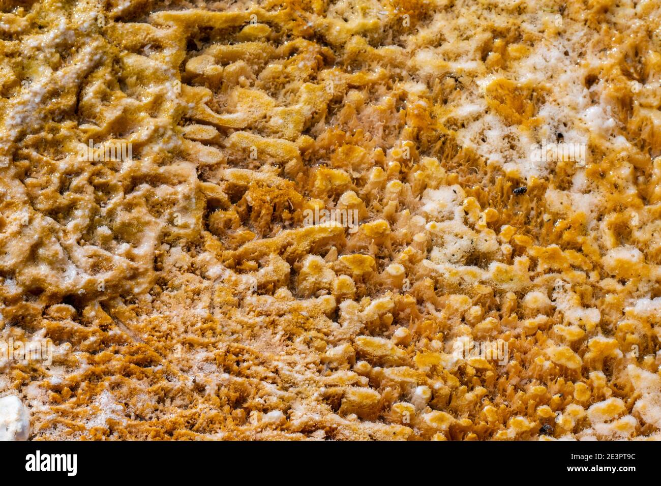 North America, Wyoming, Yellowstone National Park, Black Sand Basin. Detail of colorful thermophile bacteria mat. Stock Photo