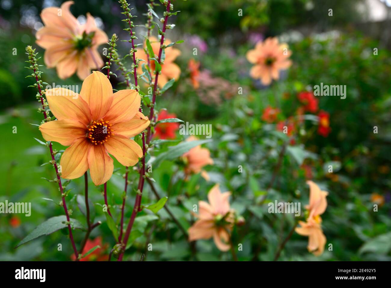 Single Flower Stand Out High Resolution Stock Photography And Images Alamy
