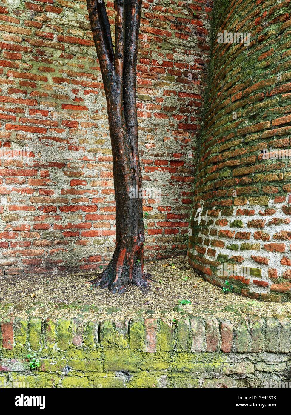 Bastion, citations, defense system, city wall, clinker wall, brick wall, city moat, fortification, historic old town, historical, old town, monument, monument site, listed, place of interest Stock Photo