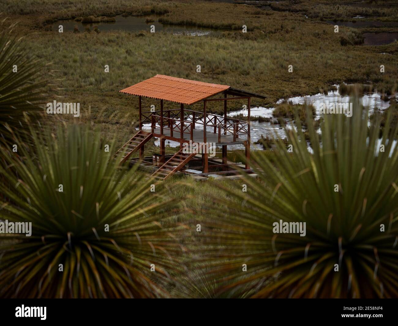 Observation deck wildlife viewing platform house building with Puya Raimondii bromeliad flower plant Titanka Queen of the Andes at Pastoruri Glacier A Stock Photo