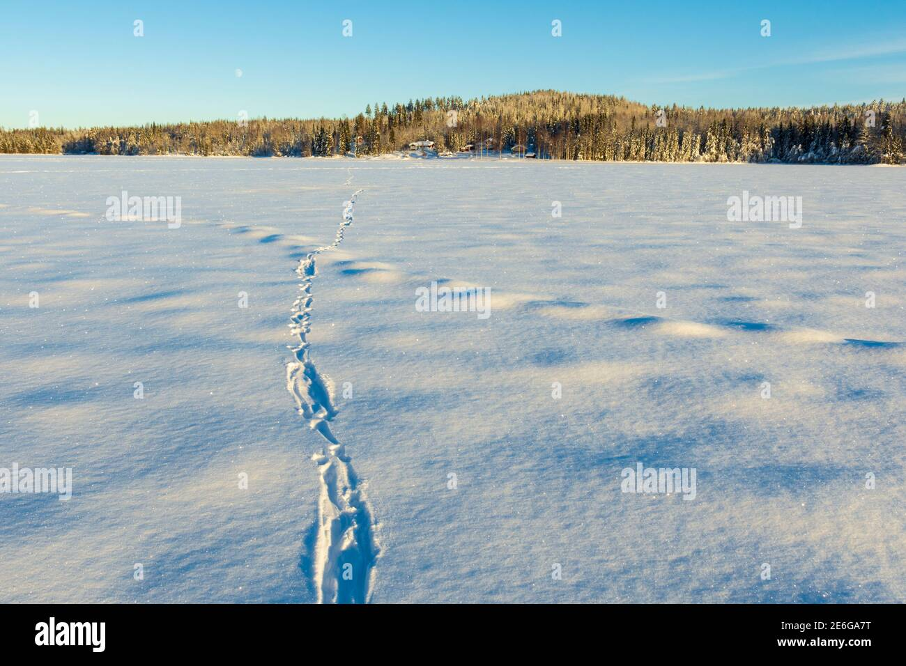 Trace of an otter (Lutra lutra) ower a lake with mountain and a blue sky in background, picture from Vasternorrland Sweden. Stock Photo