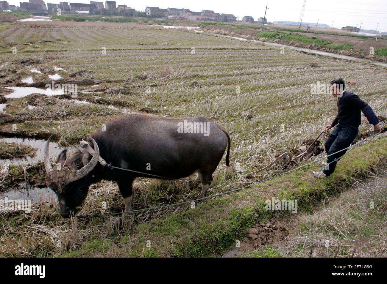 A farmer works reclaimed land by buffalo in Nanhui district on the outskirts of Shanghai February 28, 2007. Chinese leaders Hu Jintao and Wen Jiabao have made the countryside a political priority. They abolished an ancient grains tax, promised free schooling, and are offering financial aid and subsidies for seeds and infrastructure.    To match feature CHINA-PARLIAMENT-COUNTRYSIDE       REUTERS/Aly Song (CHINA) Stock Photo