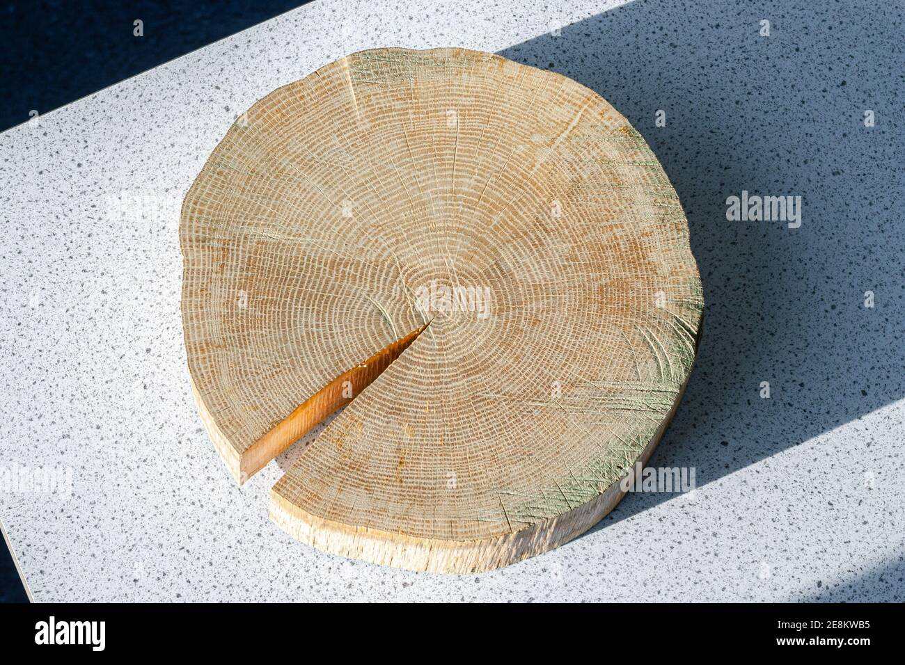 Cross section of the trunk of a tree, clearly showing the annual rings Stock Photo