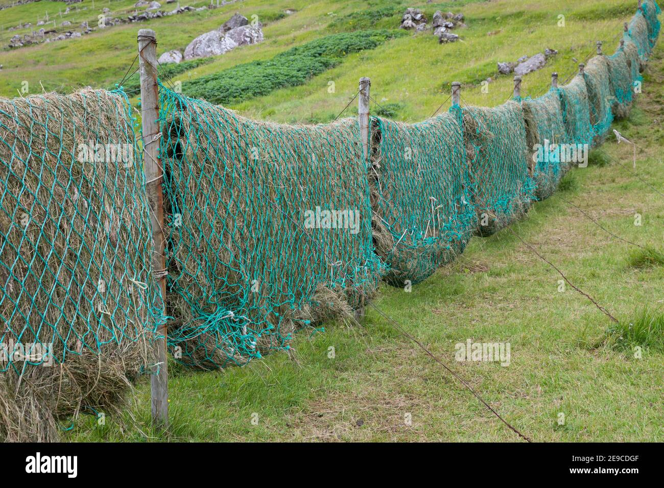 Heu trocknen in alten Fischernetzen, Heu machen, Heu, Färöer, Färöer-Inseln, Färöer Inseln, hay, to make hay, to hay, Faroe, Faeroe Islands, Les Îles Stock Photo