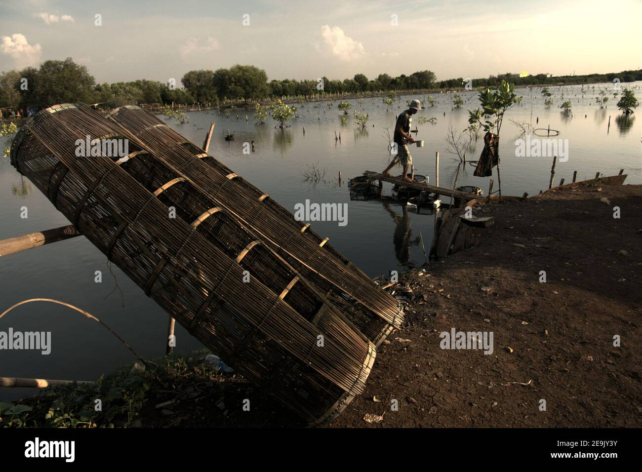 A man taking care his aquaculture installation placed on a mangrove restoration area in the coastal area of Jakarta, Indonesia. Stock Photo