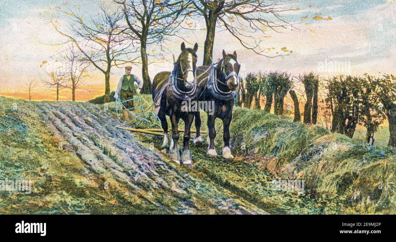 Ploughing in the Rural Life series of postcards produced by Raphael Tuck in the early 20th century. Stock Photo