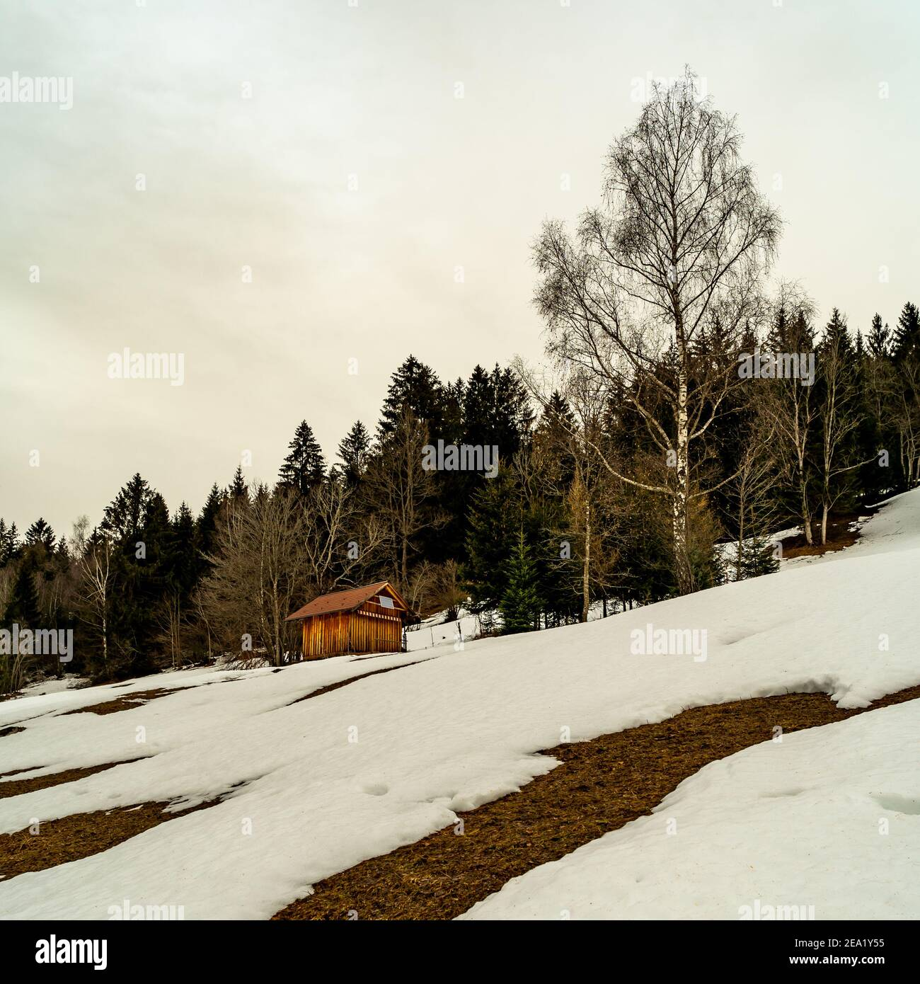 snowy field with trees and barn on the high moor. snow covered slope and Sahara sand in the air. offene Schneefelder bei Föhn und Saharasand in Wolken Stock Photo