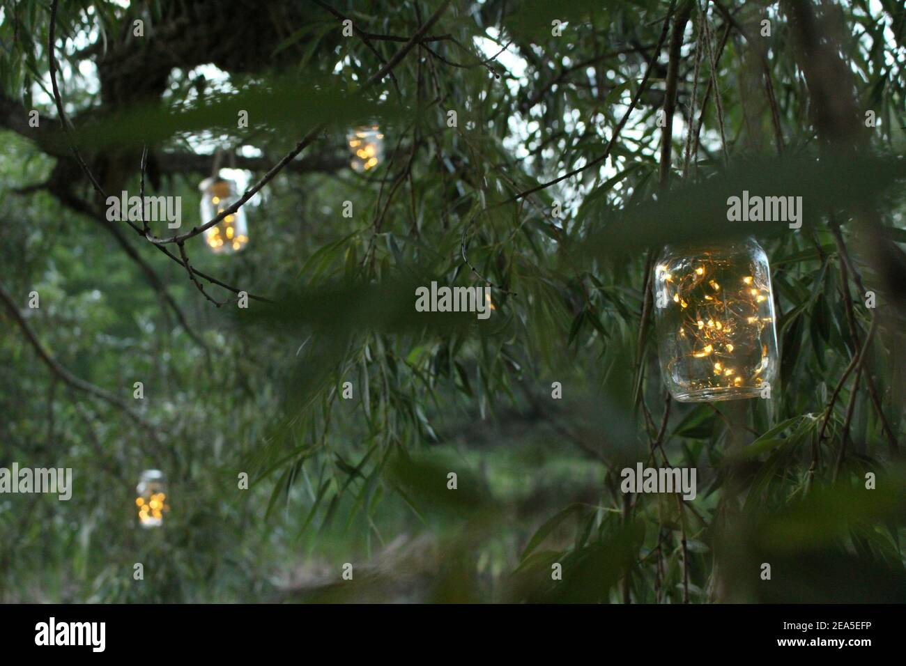Fireflys High Resolution Stock Photography and Images   Alamy