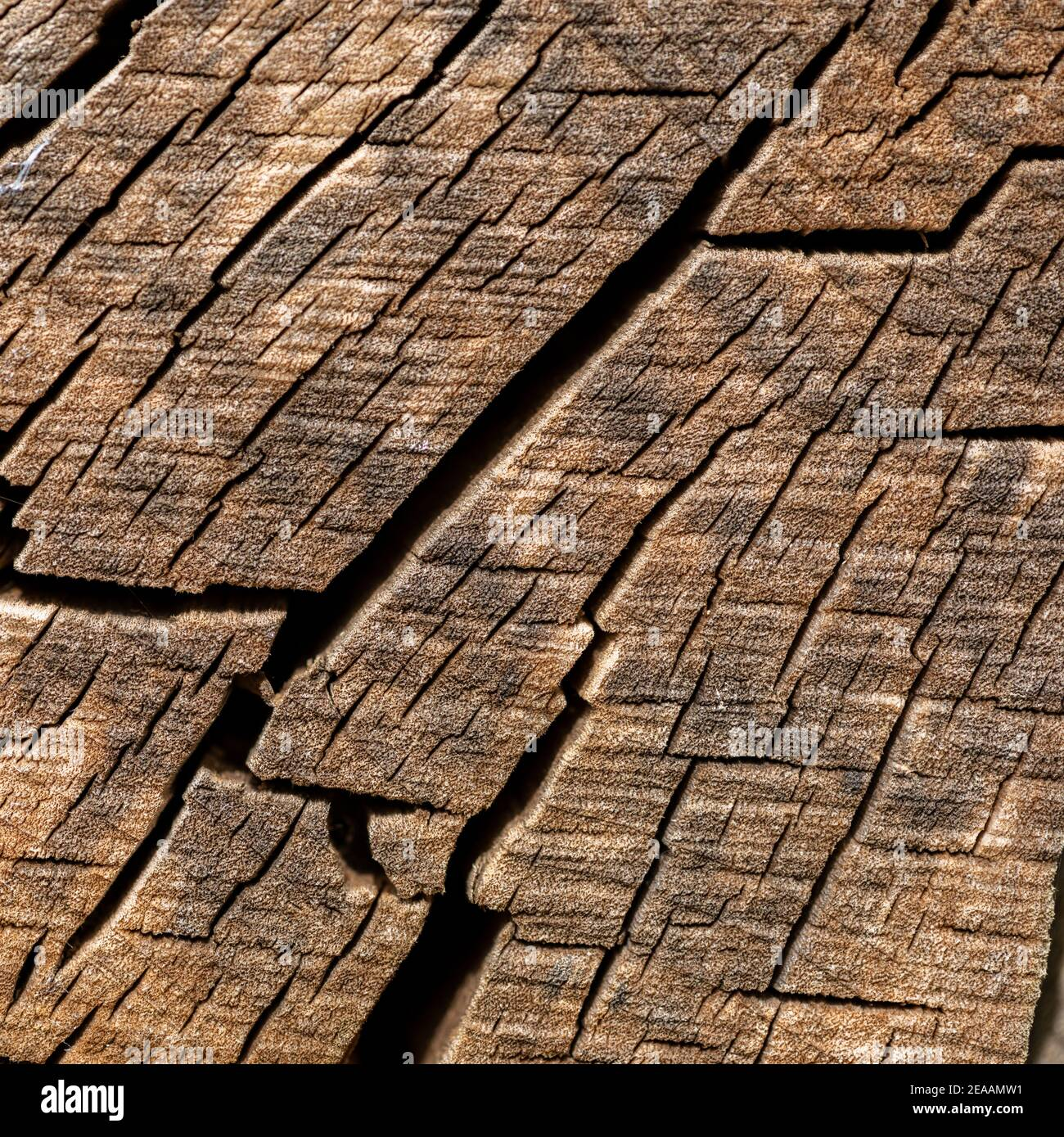 Tree slice with drying cracks. Stock Photo