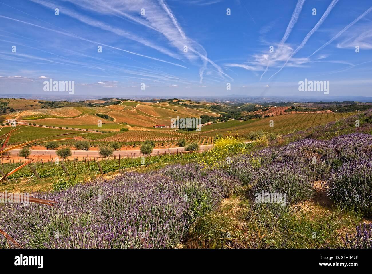 California Wine Country Stock Photo