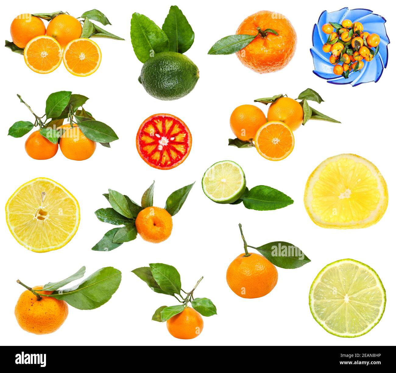 set of various citrus fruits isolated on white Stock Photo