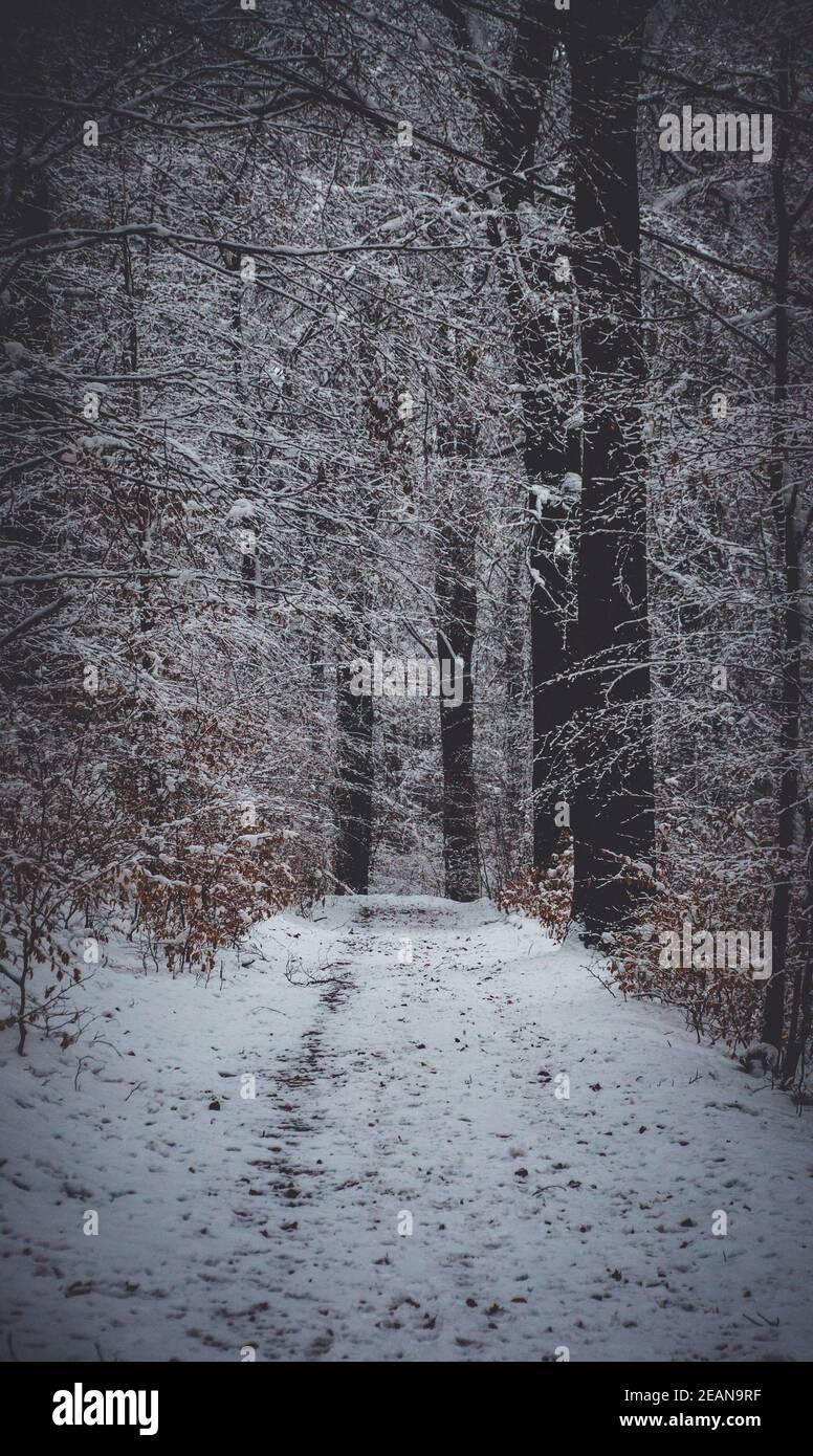 Walking in the Winterwonderland Stock Photo