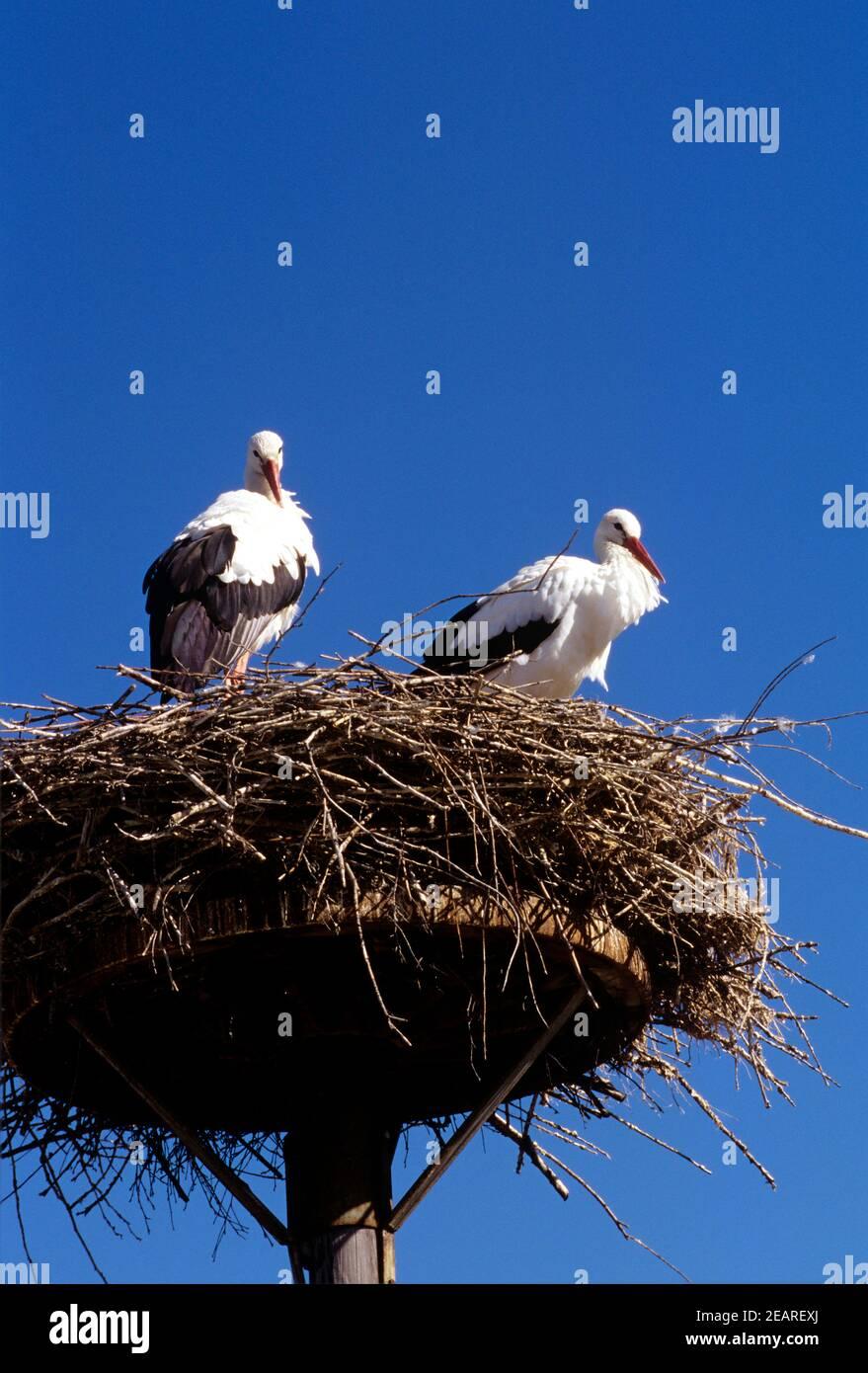 Storchennest Stock Photo