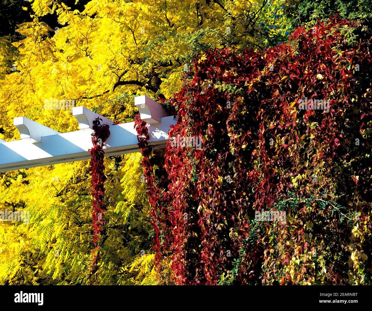 Herbstlaub, Herbstblaetter, Pergola Stock Photo