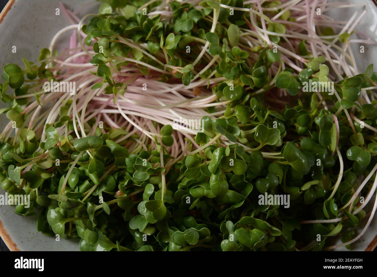Radish Sprouts in wooden bowl. Japanese or oriental radish and true daikon. Stock Photo