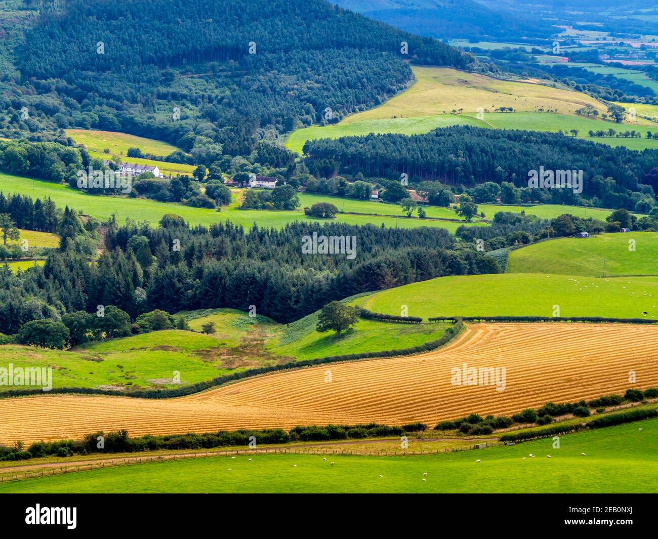 Countryside with fields and trees seem from Roseberry Topping near Great Ayton in the North Yorkshire Moors National Park England UK Stock Photo