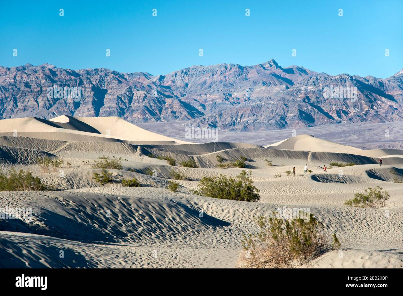 The Mesquite Flats Sand Dunes at the north end of Death Valley National Park, California. Stock Photo