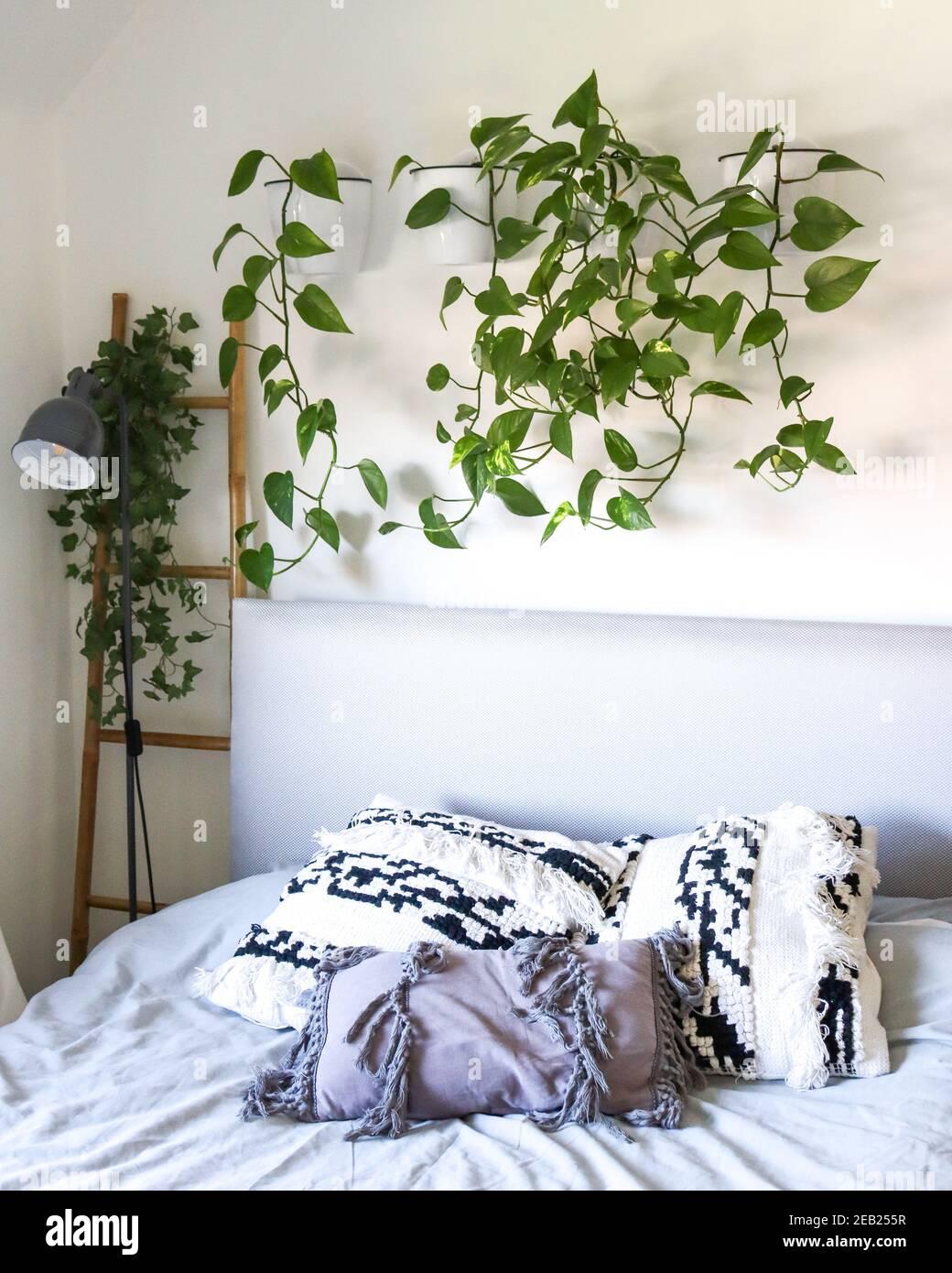 Devils Ivy hanging above bed in wall pot planter, Scandinavian ...