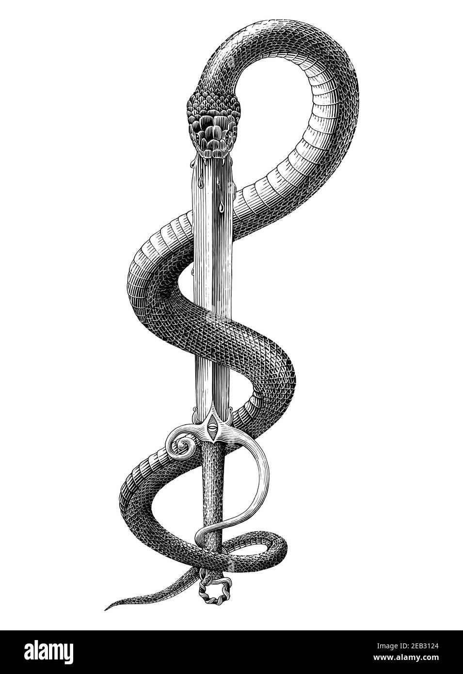 Snake spit Sword hand draw vintage engraving style black and white clip art isolated on white background Stock Vector