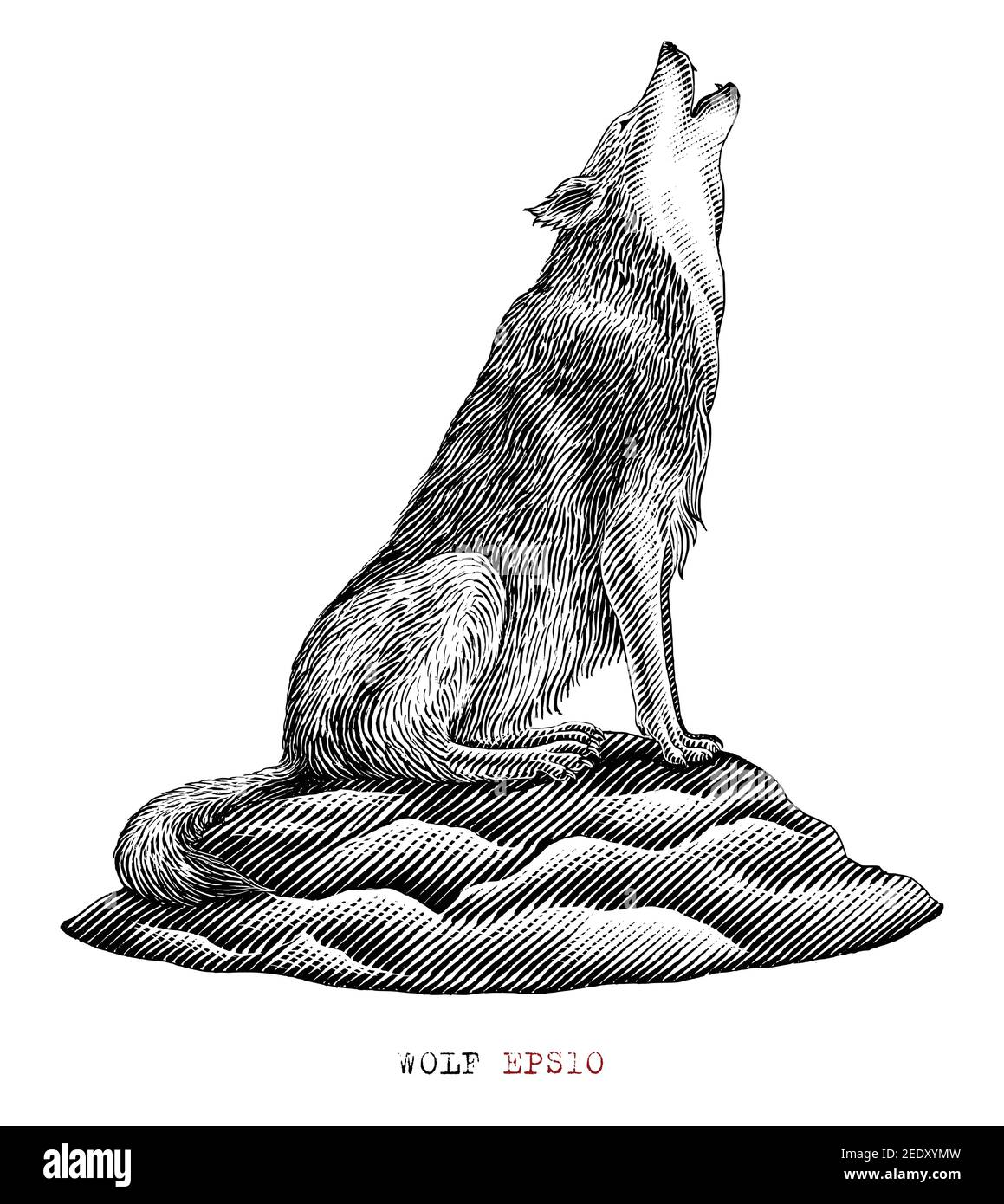 Wolf hand draw vintage engraving style black and white clip art isolated on white background Stock Vector
