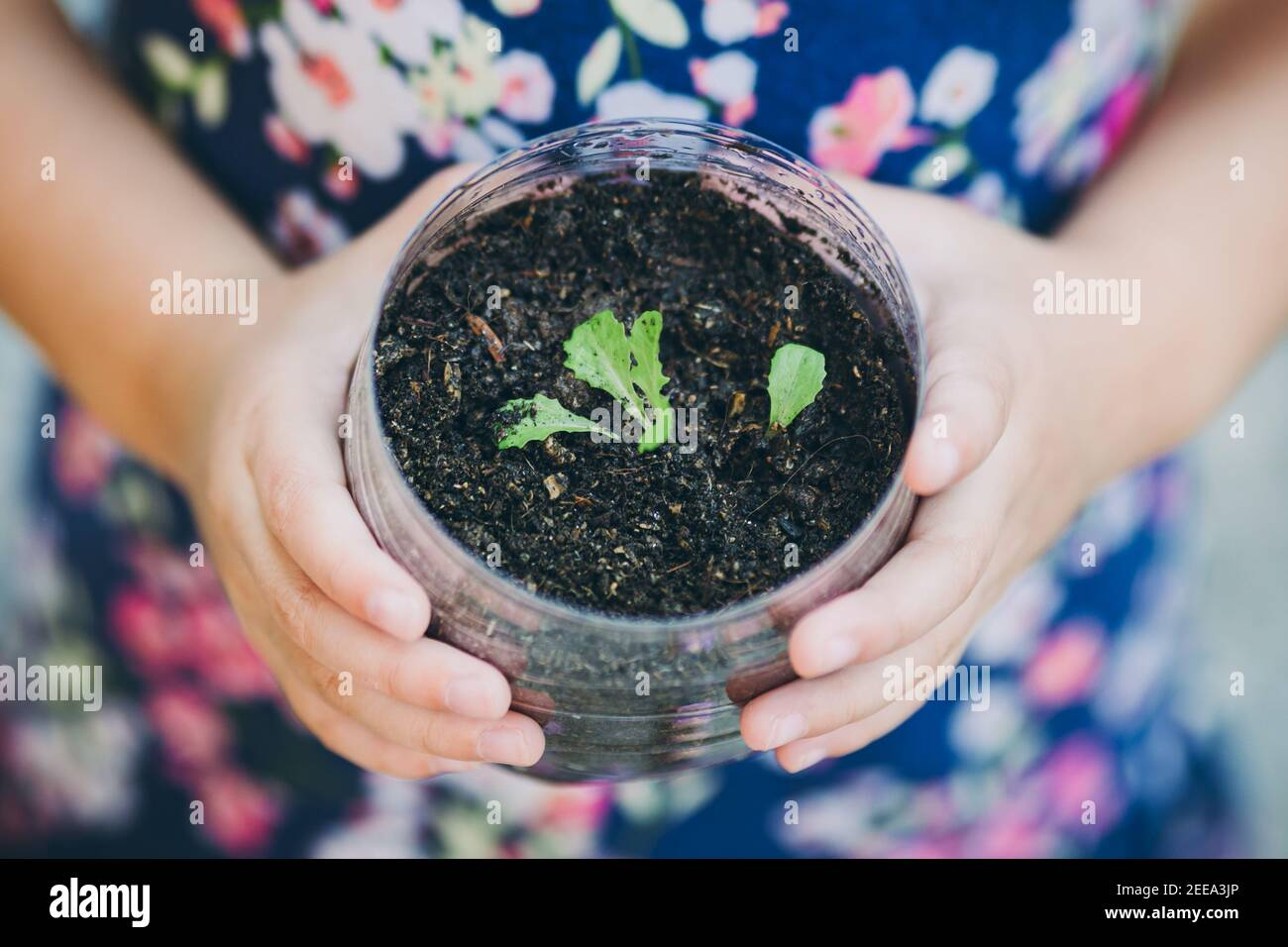 kid planting vegetable sprout in a recycled plastic reused bottle. Concept for grow your own food at home for sustainable living. Stock Photo