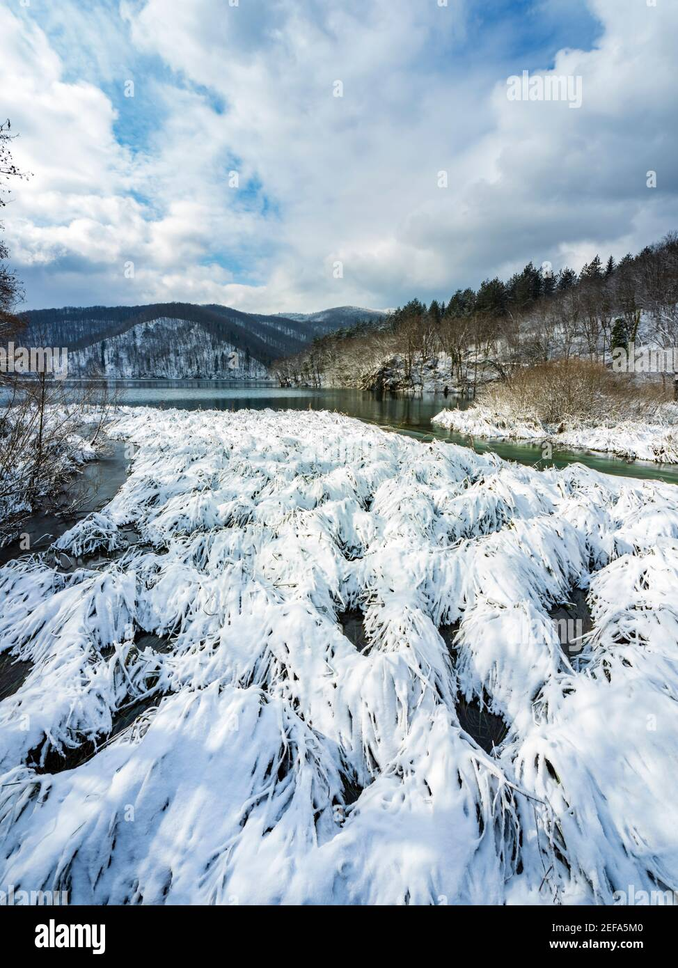 Snowy cover on suface lake Kozjak vegetation national park Plitvice lakes Croatia Europe Winter under covered cover snow ice Stock Photo