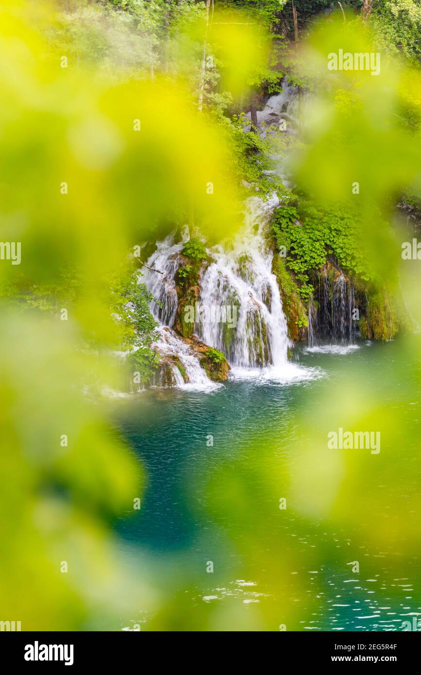 Spring season Green forest in Plitvice lakes Croatia Europe waterflow water flowing flow isolated through vegetation blurry blurred bokeh leaves hole Stock Photo