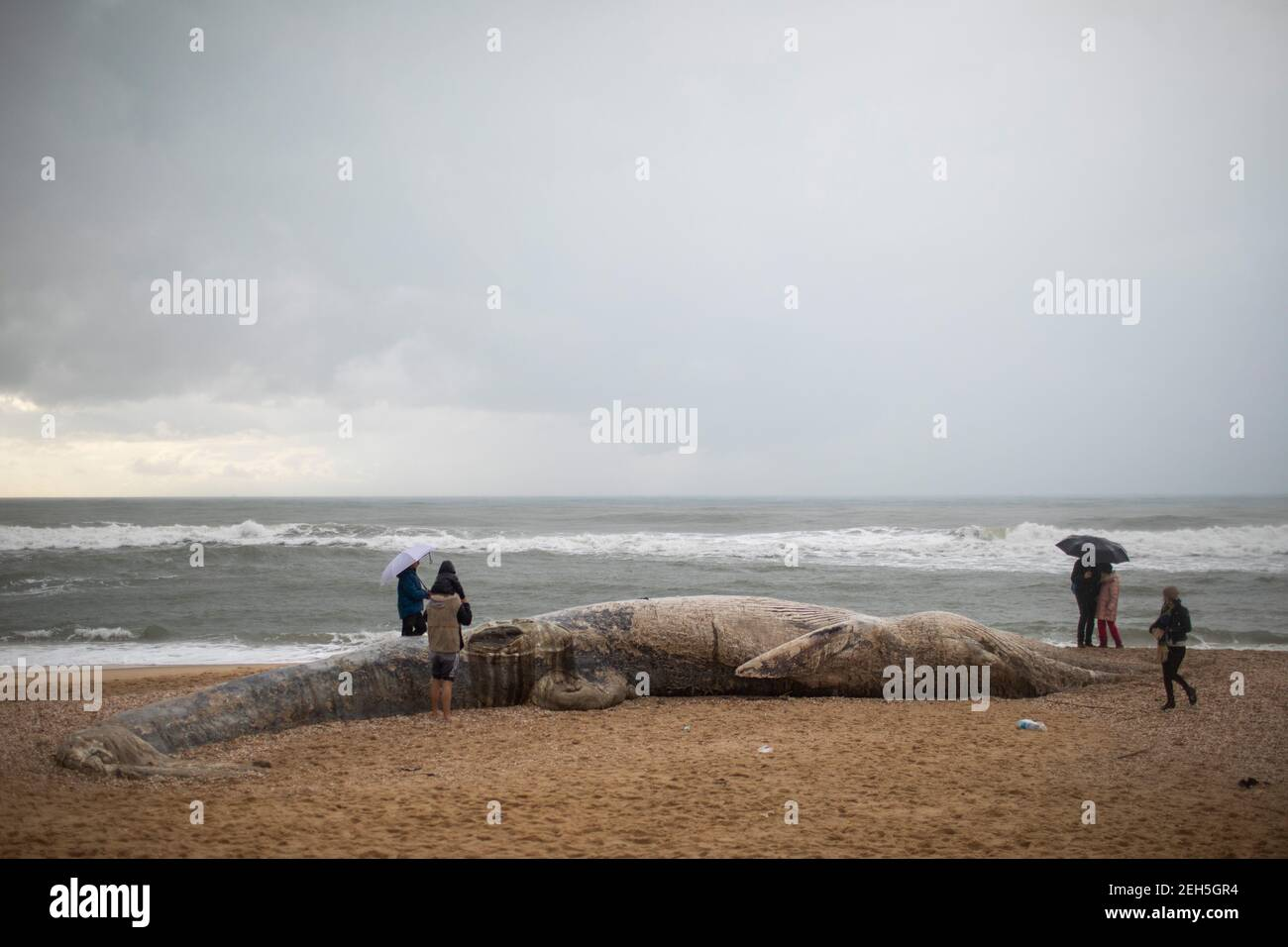 Nitzanim Reserve, Israel. 19th Feb, 2021. People observe a dead fin whale calf that washed up on a beach south of Tel Aviv. According to Israeli officials, it wasn't clear what caused the death. Credit: Ilia Yefimovich/dpa/Alamy Live News Stock Photo