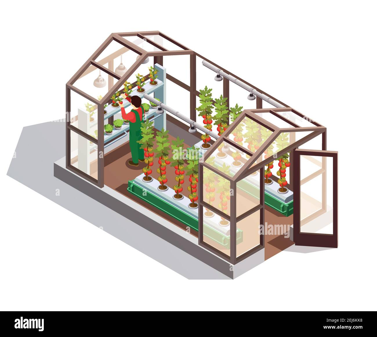 Isometric greenhouse for growing vegetables and fruits with glass walls shelves and artificial lighting isolated vector illustration Stock Vector