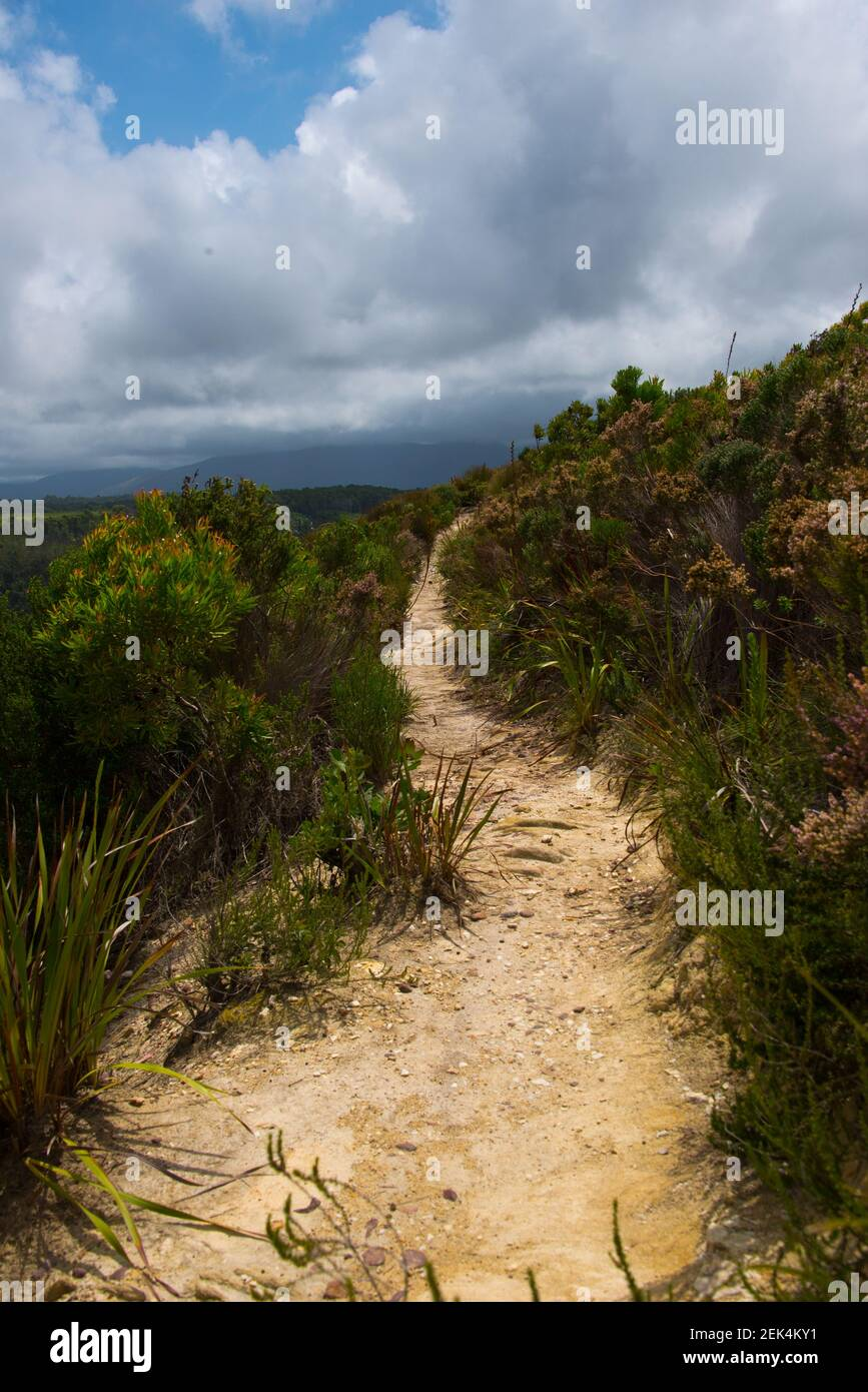 Footpath in Garden Route National Park, Tsitsikamma Section, near Storms River, Eastern Cape, South Africa Stock Photo