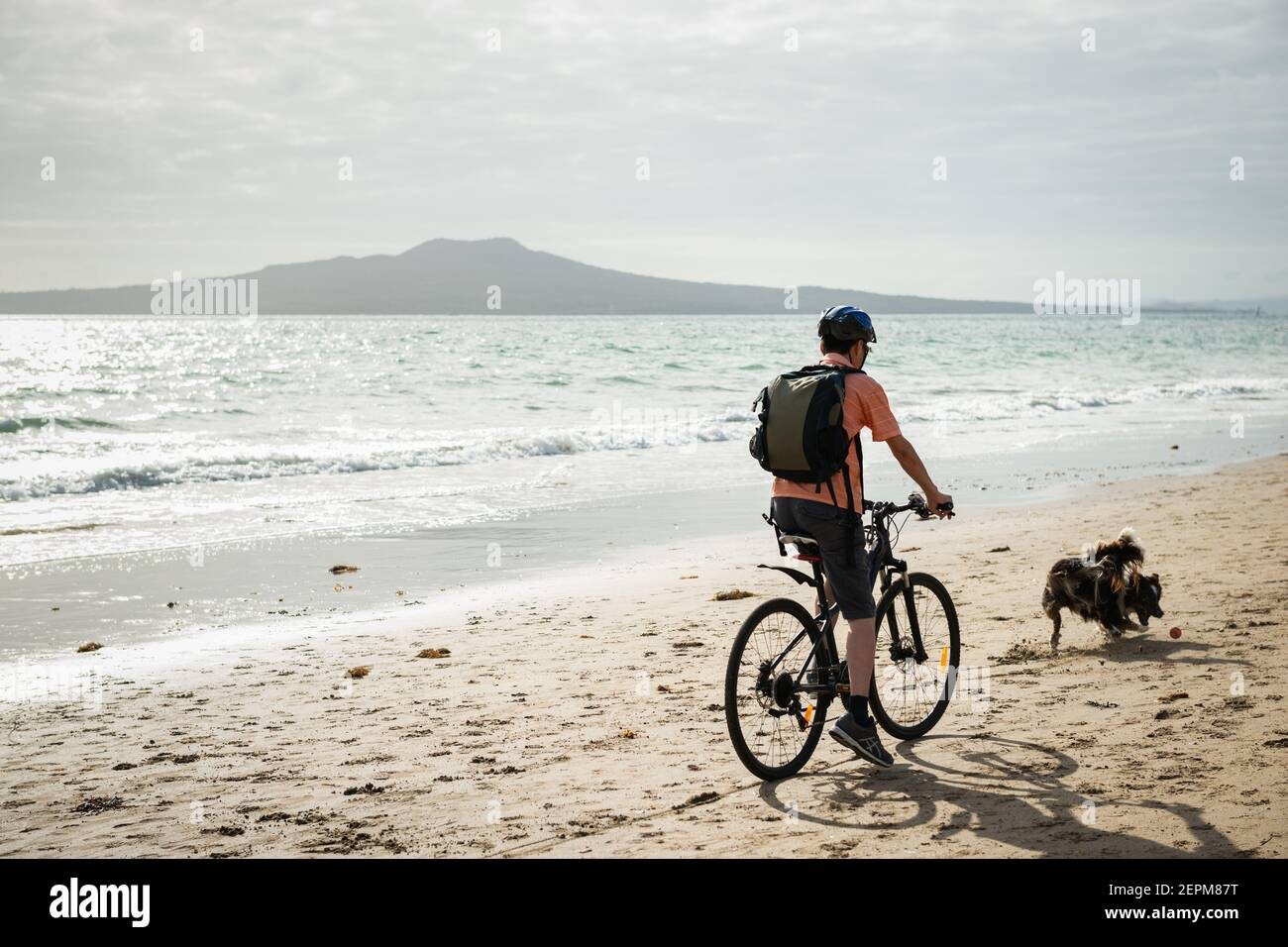 A man cycling on the Milford beach with Rangitoto Island in the distance. A dog chasing the ball suddenly running in front of the cyclist. Stock Photo