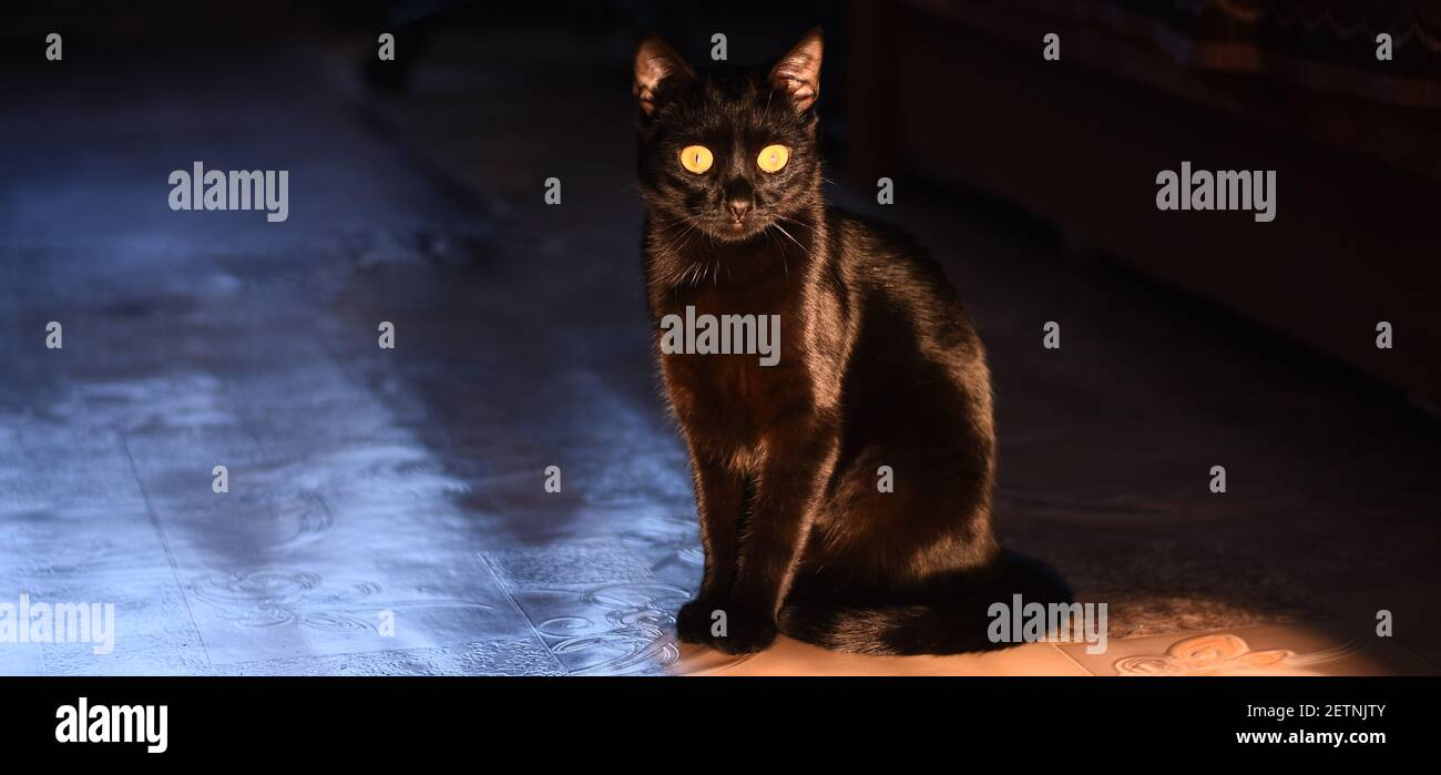 Banner. A black cat sits and looks at the camera.  Stock Photo
