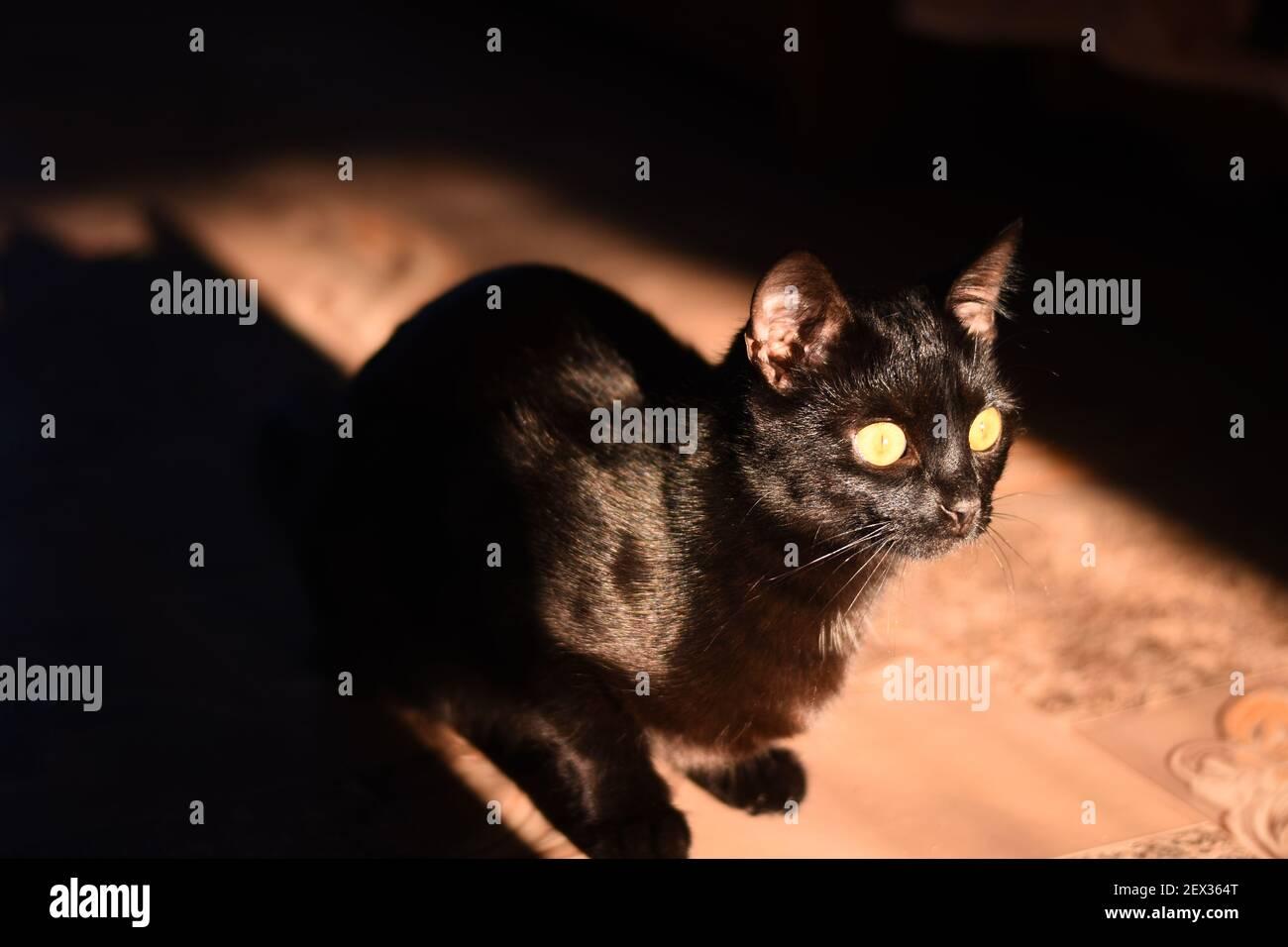 Beautiful black cat close-up sitting in the bright sun. Stock Photo